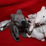 Mäusepärchen: Bild 1