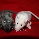 Mäusepärchen: Bild 2