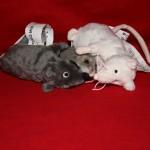 Mäusepärchen + Motte